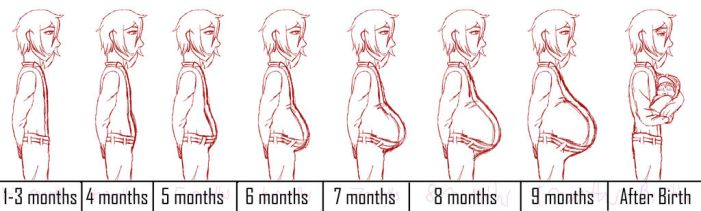 Pregnancy Progression Chart (Single) by Oogies-wife67