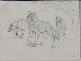 Wolves of Sympathy by white-soldier