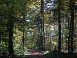 Forest trail by UdoChristmann