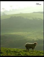 sheep_1 by j-trogen
