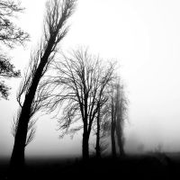 melancholy by augenweide