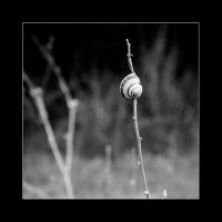 A snail at home by Arnau