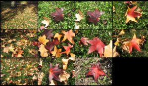 Pack fall: Leaves on ground by CotyStock