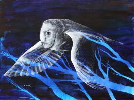 Blue - BarnOwl No.1 by KylePloehn