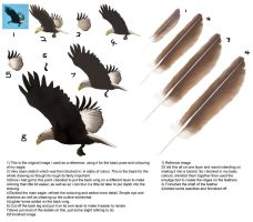 Eagle and Feather Tutorial by kovah
