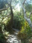 Path to Hazard Canyon Beach 2 by Nevuela