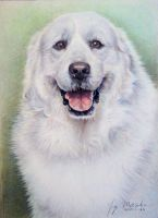 Pyrenees dog 5 by Booze528