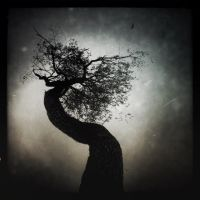 Gnarled by intao