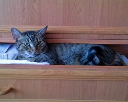 Drawer by Woolfred