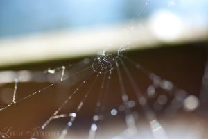 Cobwebs by Lullsstar