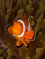 Nemo! by leighd
