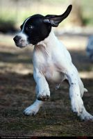 Pointer I 2009 by TiLa