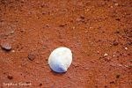 Sea Shell by countrygirl91