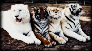 The Four Tigers Dark edition by Cerberus-Designs