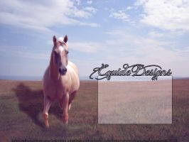 New PB Layout by EquideDesigns