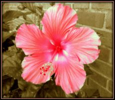 YES A HIBISCUS EXPERIMENTAL by AudraMBlackburnsArt
