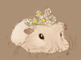 Guinea pig royalty by Alisha-town