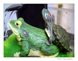 Perv Turtle on Frog by Ladyisha