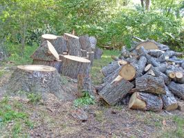 The Wood Pile by vacuumslayer