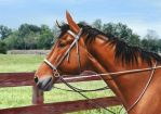 Colored Pencil Drawing: Horse (with background) by JasminaSusak