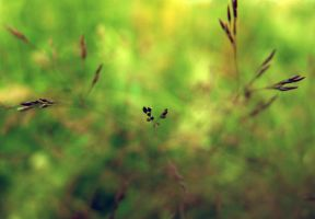 grass by ejty