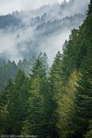 Willamette National Forest 2 by 11thDimensionPhoto