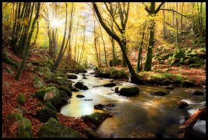 Autumn Flows by FlorentCourty