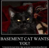 basement cat images pictures becuo