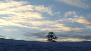 In the bleak midwinter by Tricia-Danby