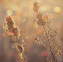 Fields of Gold by fo0losophy