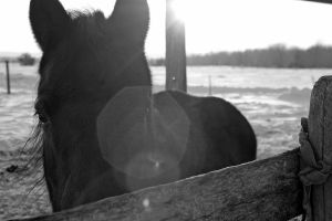 Through Another's Eyes BW by shortcake23