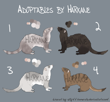 Ferret Adoptables 02 - Closed by Harkane
