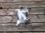 White kitten mid-roll by Ripplin