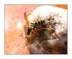 thirsty wasp by coteplage