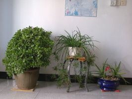 My mother's plant 1 by luwe2009