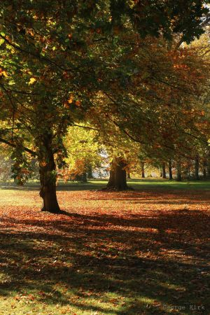 My local park by George---Kirk