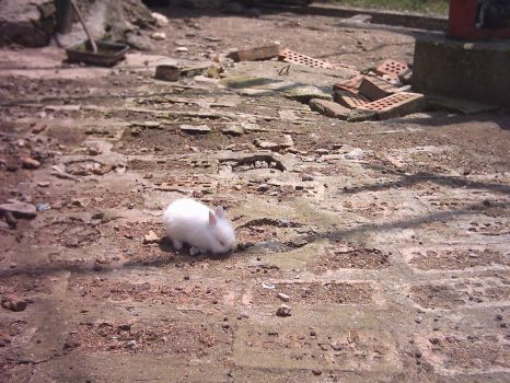Furry ball in the stones by Izida9