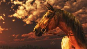 Warhorse by domino6713