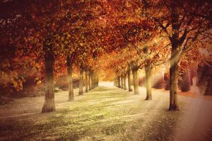 Autumn is Back by anneclaires