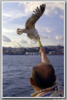seagull and man by bayugly