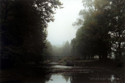 Foggy Days by photographied