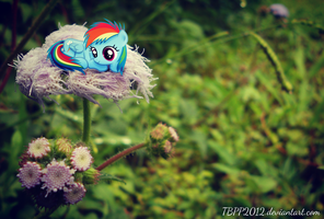Mini Filly Dashie on a Flower by MissiTofu