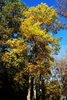 Letchworth State Park Series #33 by LifeThroughALens84