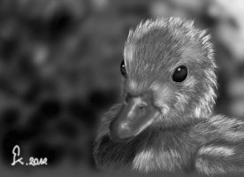 Duckling by Katsumi92