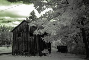 Infrared photography 4 by starrynite522