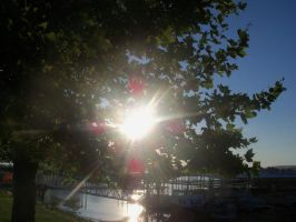 More sun and trees by Allysbiggestfan