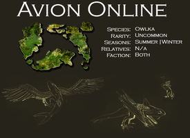 Owlka Facts by AvionOnline
