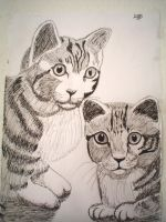 Cat's by Sheena66