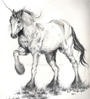 Draft Unicorn sketch by livegroban