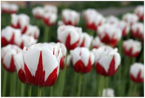 Red-White-Green Flowers by McSes